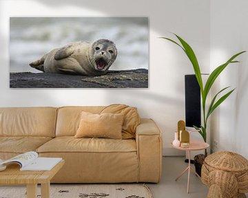 zeehondje