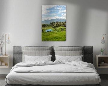 Sumatra van Hans Lunenburg