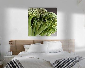 broccoli van Toon Maes