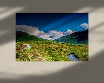 Einsamer Baum in Norwegen | Svartevatnet von Ricardo Bouman