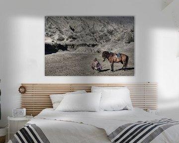 Horse Hello van BL Photography