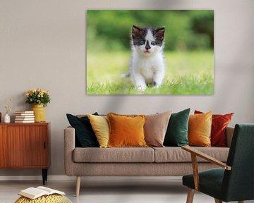 Kitten poes op een natuurlijk grasveld van Henk van den Brink