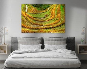Rijst terrassen Longsheng