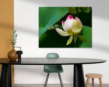 Ontluikende bloem sur Rob Hermanns Photography