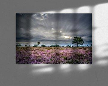 Winderig op de heide van Richard Guijt Photography