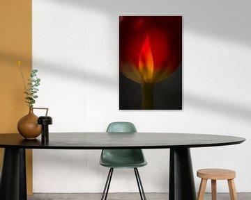 Tulp in vuur en vlam van Herman van Ommen