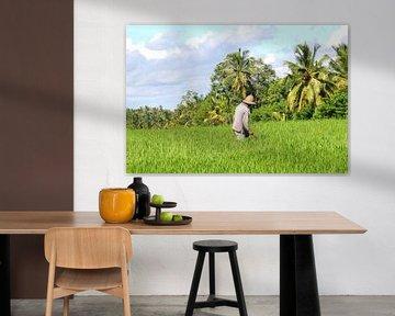 Boer op het land, Bali