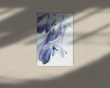Delfts blauw von Marlies Prieckaerts