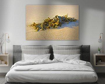 Zeewier op het strand van Noordwijk