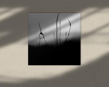 Perle rare von Arnaud Bertrande
