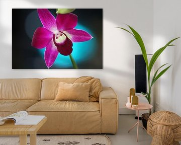 Thaise orchidee van Loraine van der Sande