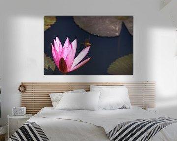 Waterlelie (waterlilly) van Loraine van der Sande