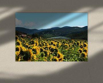 Sunflowers 2 van Jodi van Dam