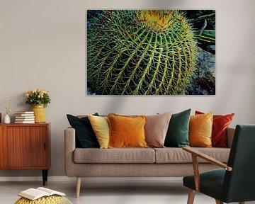 Cactus van Jolien De Vulder