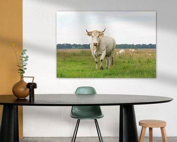 Blonde d'Aquitaine koe met  stier en kalveren op de achtergrond van Henk van den Brink