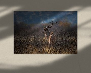 Kudu op de Uitkijk von Guus Quaedvlieg