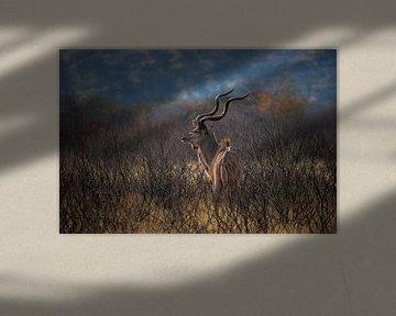 Kudu op de Uitkijk van Guus Quaedvlieg