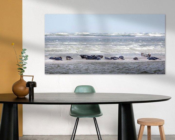 Impression: Zeehonden sur Evert Jan Kip