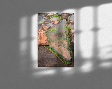 Wasserpflanzen auf Felsen, Arran, Scottland sur Johan Zwarthoed