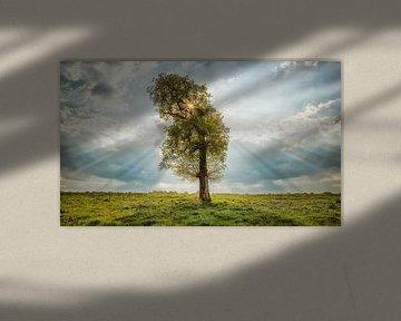 The lonely tree  von Ben van Sambeek