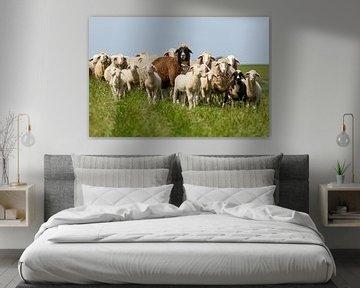 Familie Schaf auf dem Deich van Rolf Pötsch