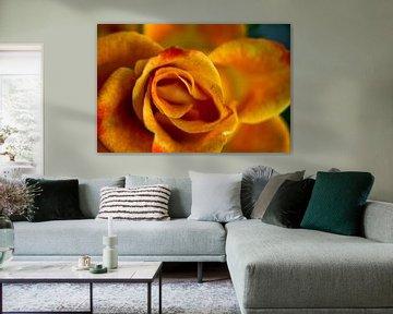 Orange Rose  von 2BHAPPY4EVER.com photography & digital art
