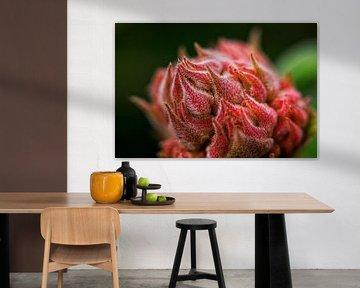 Hortensie von 2BHAPPY4EVER.com photography & digital art