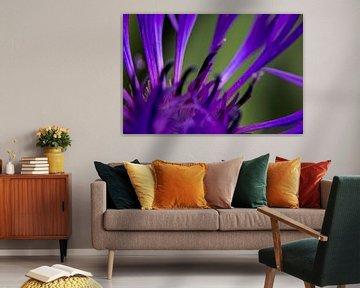 Purperrote Blume  von 2BHAPPY4EVER.com photography & digital art