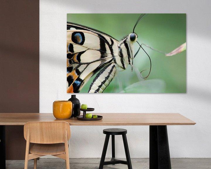 Sfeerimpressie: Tropisch vlinderfestival van Chris Heijmans