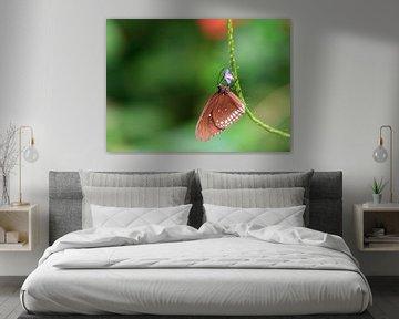 Vlinder rechts von Krijn de Haas