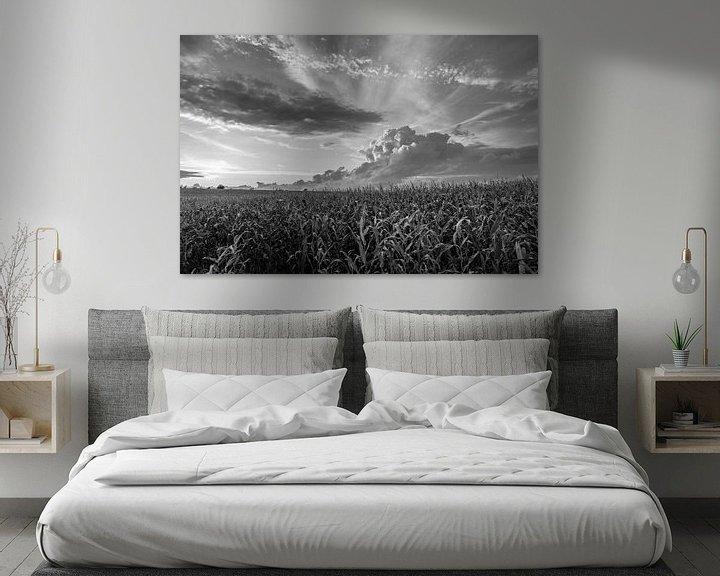 Sfeerimpressie: Sonnenstrahlen über einem Maisfeld van Rolf Pötsch