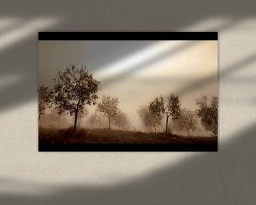 Olive Trees in the Mist von Manuel Meewezen