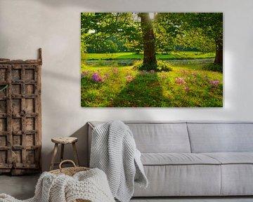 Herfsttijloos en lindeboom van Michel van Kooten