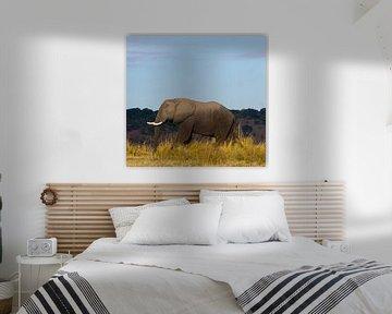 Portret van een olifant von Christel Nouwens- Lambers