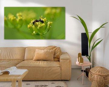 Mier op gele bloem sur Frank de Ridder