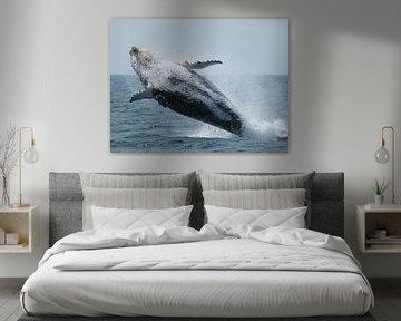 Jumping whale van Benny Van Bockel