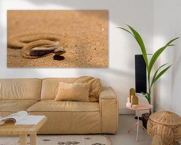 Woestijnadder in de Namibwoestijn von Christel Nouwens- Lambers