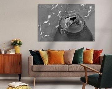 Zeehond zwart/wit van Marcel Pietersen