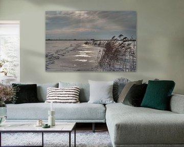 Riet in de winter van Alexander van der Sar