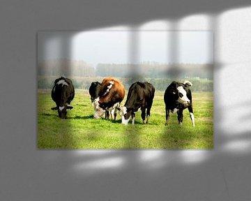 Koeien sur Anuska Klaverdijk