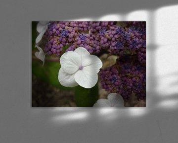 Kijk mij eens mooi zijn von Erna Fotografie