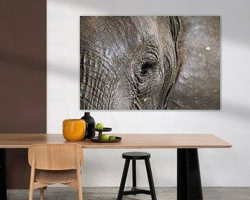 Eye of the elephant van W. Woyke