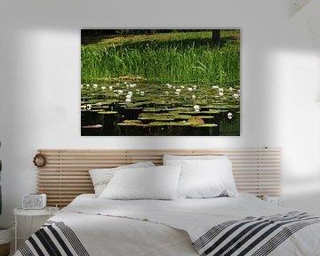 Water lilies van Robert Fischer