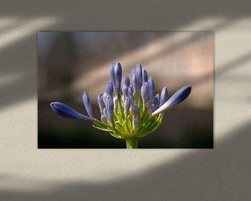 Paarse bloem van Dries Decorte
