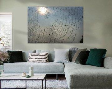 Web van Michel van Kooten