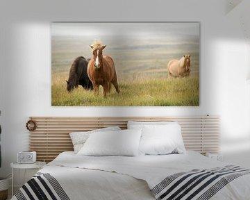 Ijslandse ponies von Paul Barendregt