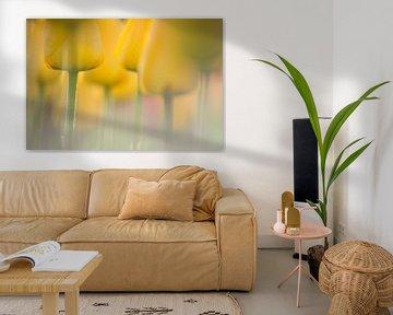 Tulpenveld von Frederik van der Veer