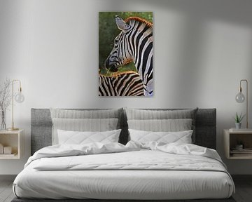 Zebra von Manuel Schulz