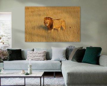 Löwe von Manuel Schulz