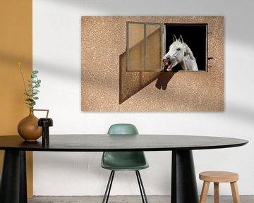 Portrait de cheval blanc sur Eric Dufour